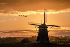 Gäss som flyger mot solnedgången på den holländska väderkvarnen royaltyfria bilder