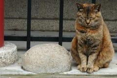 Głęboko zrelaksowany kot przy małą świątynią w Ueno parku, Tokio, Japonia zdjęcie stock