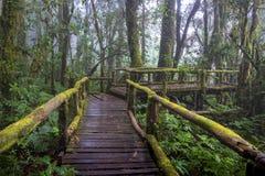 Gå banan i regnskog på Doi Intanon nationalpark, Chiang Mai, Thailand Arkivbilder