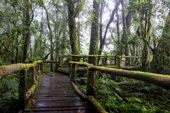 Gå banan i regnskog på Doi Intanon nationalpark, Chiang Mai, Thailand Royaltyfri Bild