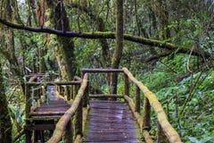 Gå banan i regnskog på Doi Intanon nationalpark, Chiang Mai, Thailand Arkivbild