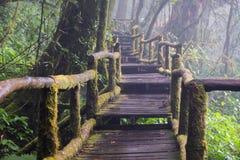 Gå banan i regnskog på Doi Intanon nationalpark, Chiang Mai, Thailand Arkivfoto