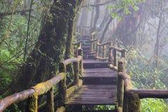 Gå banan i regnskog på Doi Intanon nationalpark, Chiang Mai, Thailand Royaltyfria Foton