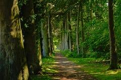 Gå banan till och med en frodig grön vårskog royaltyfri foto