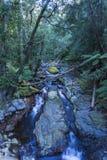 Gå banan till och med regnskog Arkivbilder
