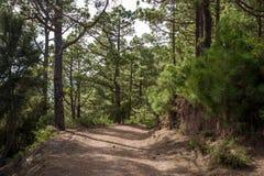 Gå banor av den LaEsperanza skogen, kanariefågelöar Arkivfoto