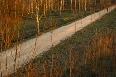 Gå bara bland träd på solnedgången Arkivfoto