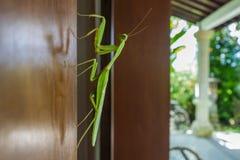 Gå bladet på en dörr i Bali Arkivfoton