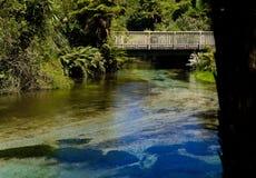 Gå bron över en ström i den infödda busken NZ Royaltyfri Foto