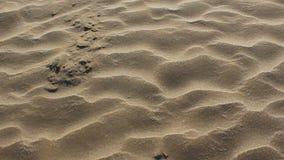 Gå eller rörande framåtriktat på sand lager videofilmer
