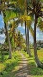 Gå en bana till och med tropiska palmträd, Ubud, Bali Royaltyfri Fotografi
