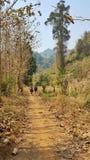 Gå en skogbana in i bergen Fotografering för Bildbyråer