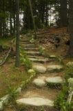 gå för bana som är skogsbevuxet fotografering för bildbyråer
