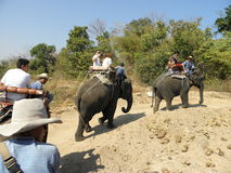 gå för elefant Royaltyfri Foto