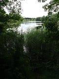 Gå för en gå i en skog fotografering för bildbyråer