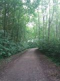 Gå för en gå i en skog Arkivfoton