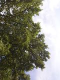 Gå för en gå till och med skogen Arkivfoton