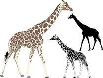 gå för giraff stock illustrationer