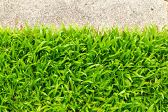 gå för grässten Royaltyfria Bilder
