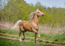 gå för häst Royaltyfria Foton
