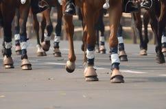 gå för hästar Arkivfoton