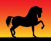 gå för hästspanjor Royaltyfri Bild