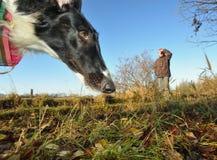 Gå för hund Fotografering för Bildbyråer