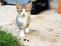 Gå för kattunge Royaltyfria Bilder