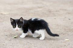 gå för kattungestray Arkivfoton