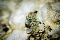 Gå för krabba Fotografering för Bildbyråer