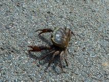 gå för krabba Royaltyfria Bilder