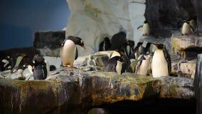 Gå för pingvin och rörande vingar i Antarktis område på Seaworld lager videofilmer