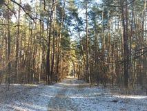 Gå för skog royaltyfria foton