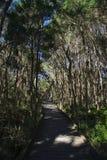 gå för skogbana arkivbilder