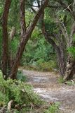 gå för skogbana arkivfoton