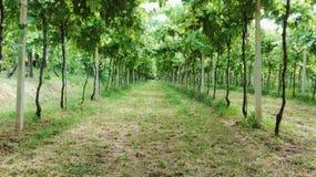 gå för vingård Royaltyfria Foton
