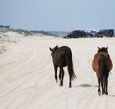 Gå hästar Fotografering för Bildbyråer