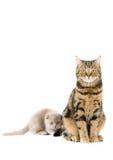 gå i ax katter lop skott arkivbilder