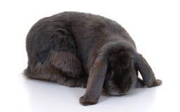 gå i ax lång kanin Arkivfoton