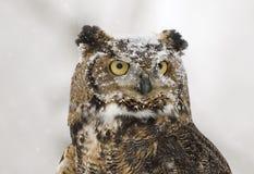 gå i ax lång owl Arkivfoto