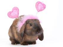 gå i ax lop kanin fotografering för bildbyråer