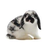 gå i ax lop kanin royaltyfria foton