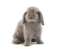 gå i ax lop kanin arkivfoto
