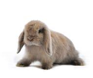 gå i ax lop kanin arkivbild