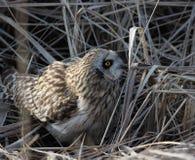 gå i ax owlkortslutning Arkivfoto