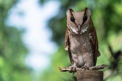 gå i ax owlkortslutning arkivbild