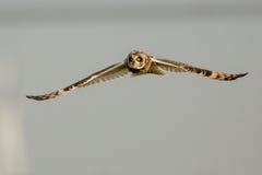 gå i ax owlkortslutning Royaltyfria Bilder