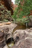 Gå in i den Catherdral klyftan, Purnululu, nationalpark Royaltyfri Fotografi