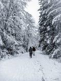 Gå i den snöig vinterunderland royaltyfria bilder