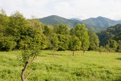 Gå i det gröna gräset och de gröna kullarna Royaltyfri Fotografi